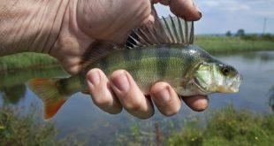 صيد الاسماك في المنام , تفسير رؤية السمك واصطياده في الحلم