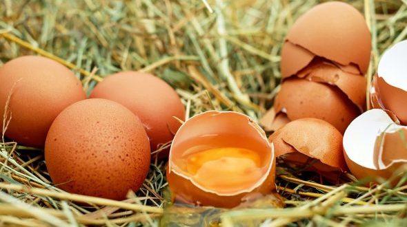 صور تفسير حلم بيض الدجاج , اسرار تدهشك من رؤيه البيض فى الاحلام