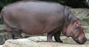 حيوان 8 حروف , من اضخم الحيوانات من 8حروف ماذا يكون