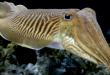 صور هل تعلم عن الحيوانات البحرية , معلومات رائعه عن الحيوانات البحريه