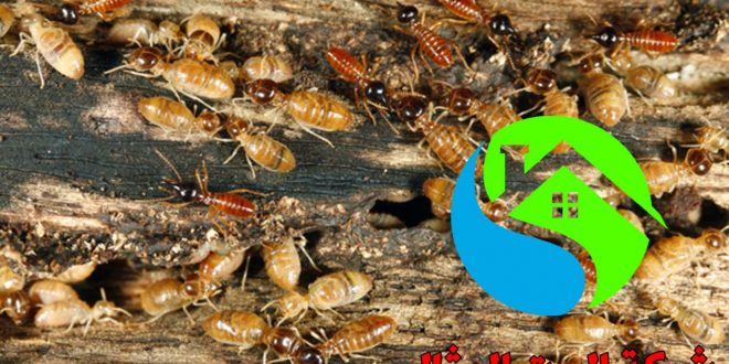 صورة شركة مكافحة النمل بالرياض , نمل كتير في جدار الغرفه ماذا افعل