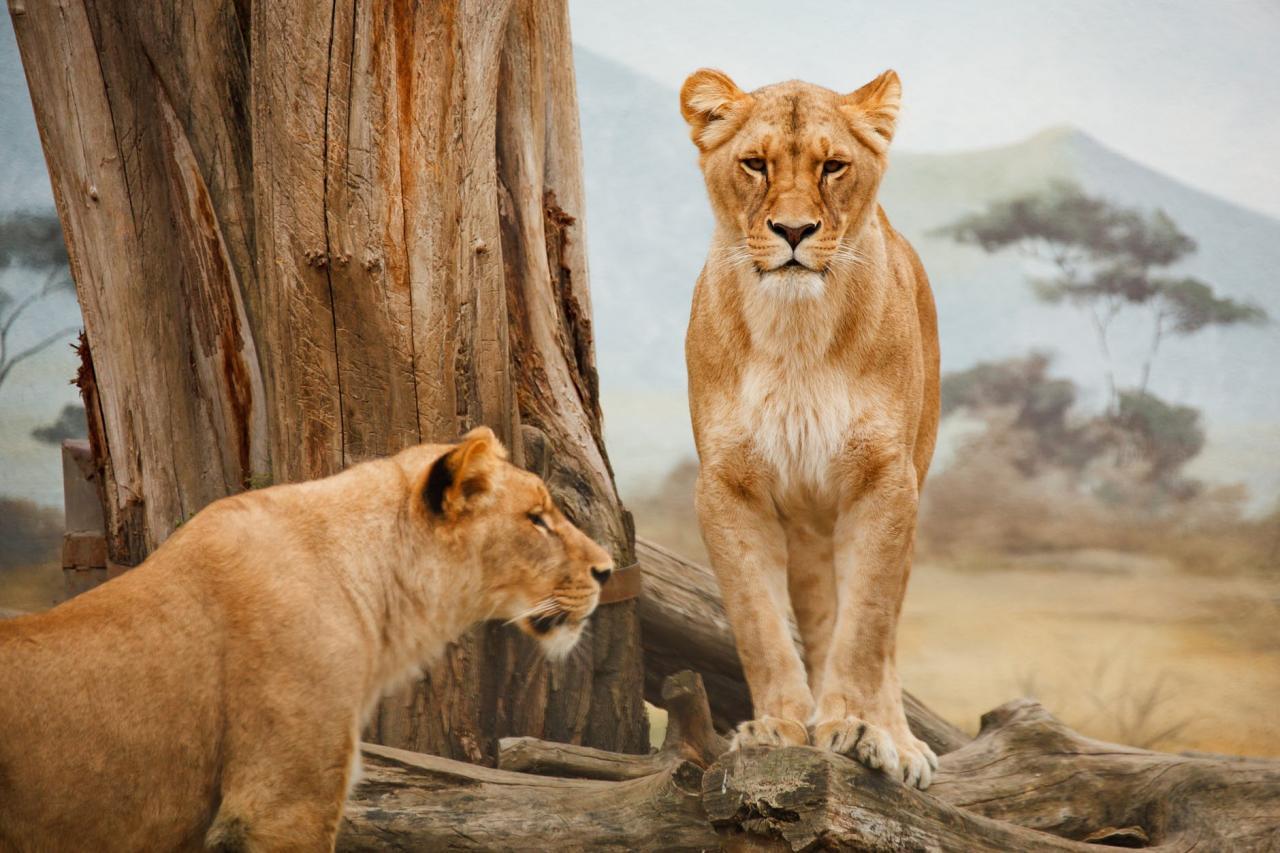 صورة اغرب زواج حيوانات , اغرب عادات التزوج عند الحيوانات