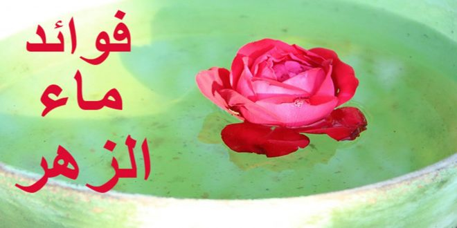 صورة فوائد ماء الزهر للتنحيف , وصفتي للتخسيس بماء زهر الليمون