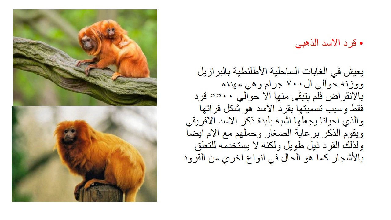 صورة اقوال عن الحيوانات , الحيوانات هيا اوفي المخلوقات ازي هقلك 3204 4
