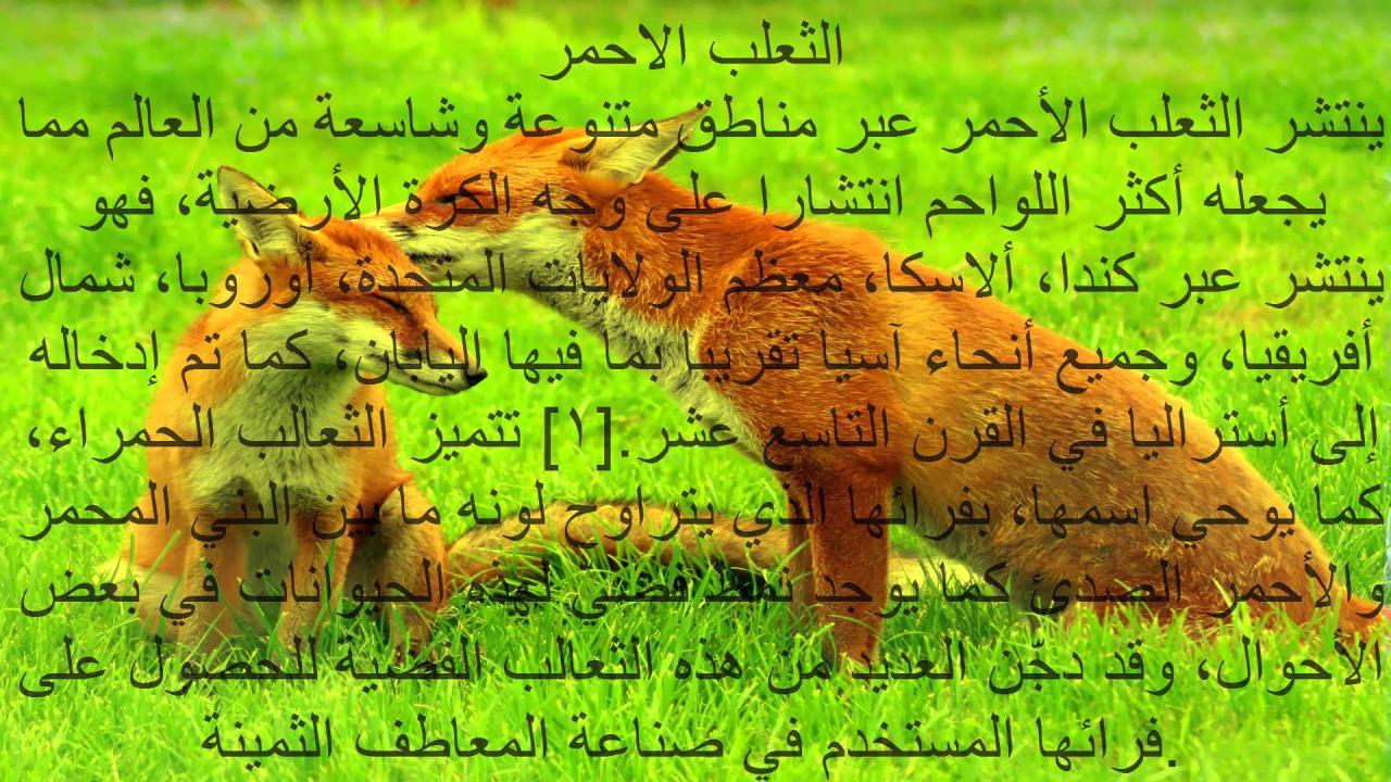 صورة اقوال عن الحيوانات , الحيوانات هيا اوفي المخلوقات ازي هقلك 3204 6