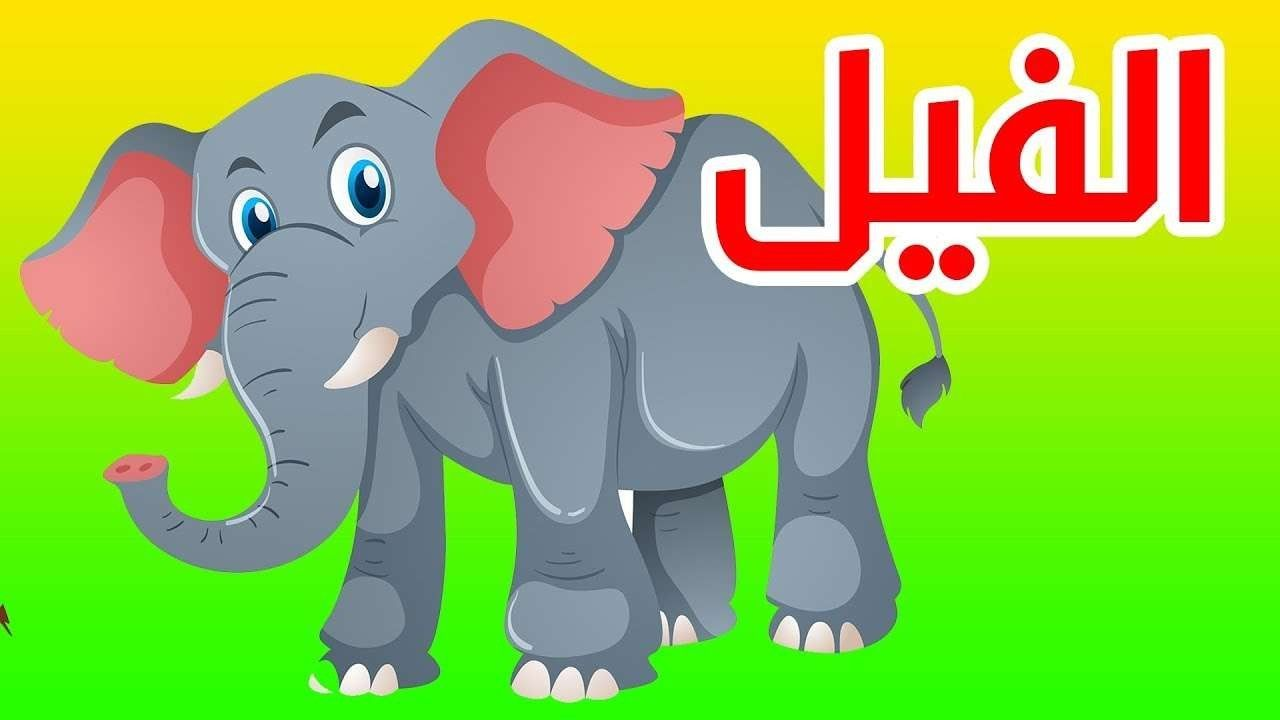 صورة اقوال عن الحيوانات , الحيوانات هيا اوفي المخلوقات ازي هقلك 3204 7