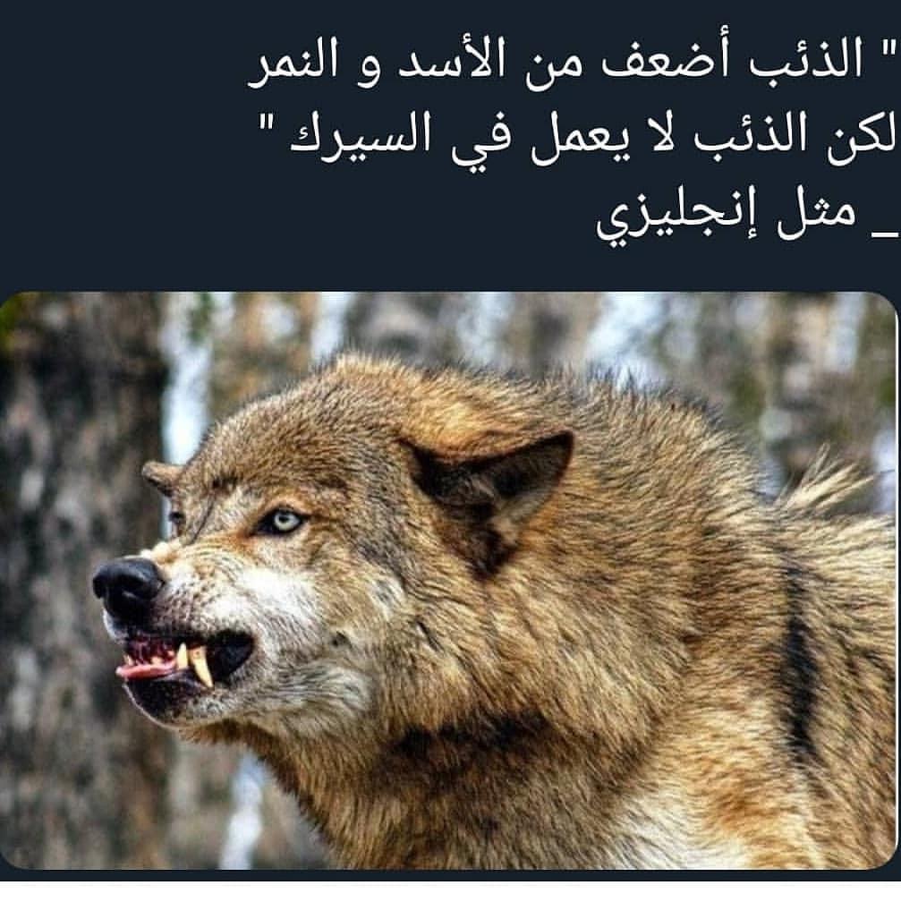 صورة اقوال عن الحيوانات , الحيوانات هيا اوفي المخلوقات ازي هقلك 3204 8