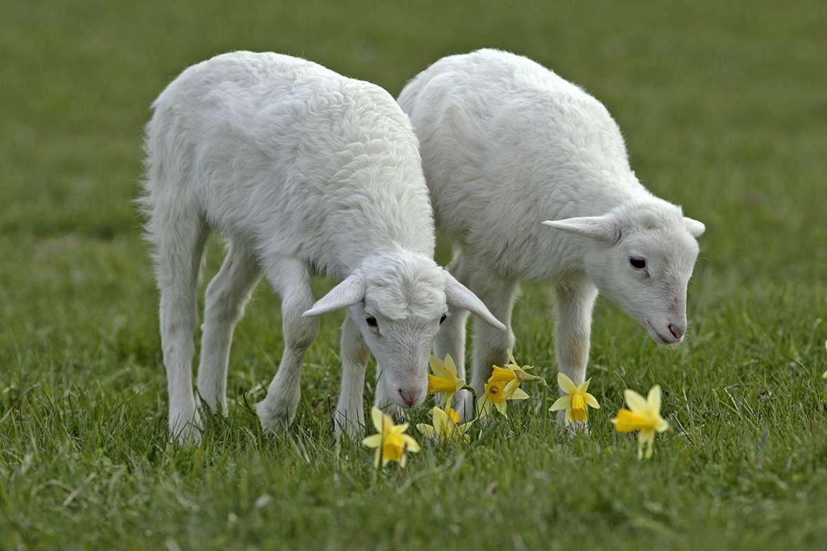 صورة اقوال عن الحيوانات , الحيوانات هيا اوفي المخلوقات ازي هقلك 3204 9