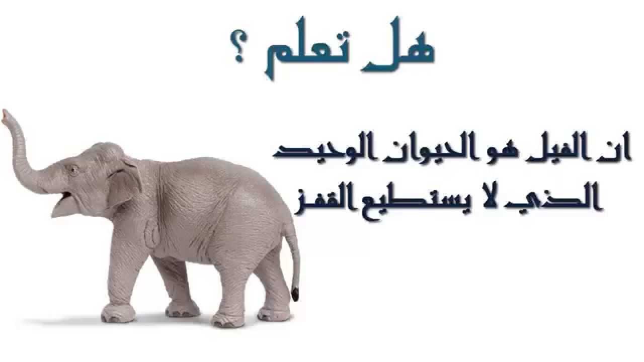 صورة اقوال عن الحيوانات , الحيوانات هيا اوفي المخلوقات ازي هقلك 3204