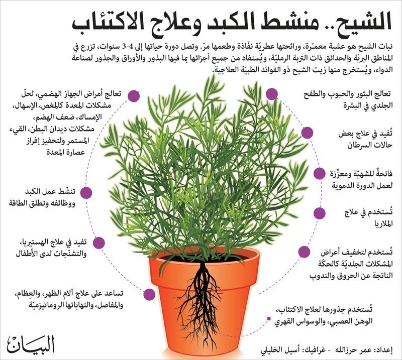 صورة ماهي فوائد الشيح , العشبة المعجزة