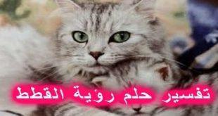 صورة تفسير حلم القط البني , تفسيرها للمتزوجه و العزباء