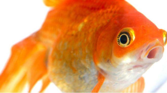 صورة انواع اسماك الزينة بالصور والاسماء , تعرف على سحر هذه المخلوقات