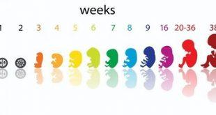الحمل كم اسبوع بالضبط , طريقه حساب اسابيع الحمل