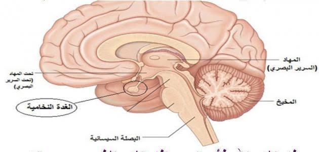 صورة علاج الغدة النخامية بالاعشاب جابر القحطاني , الاعشاب كعلاج مساعد