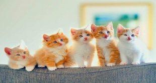 صورة ولادة القطط في المنام , تعرف على ماترمز اليه فى المنام