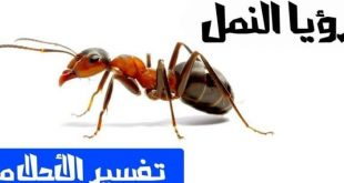 صورة تفسير حلم النمل في البيت , خروج النمل يحمل شئ سيئ خير
