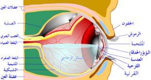 علاج شبكية العين بالقران الكريم , شفاء و علاج من القران للعين