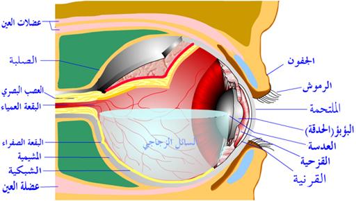 صورة علاج شبكية العين بالقران الكريم , شفاء و علاج من القران للعين 1543