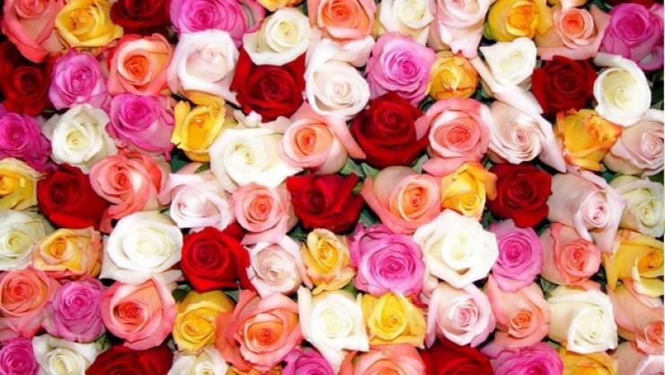 صورة معنى الوان الورد , كيف تختاري لون الورد لكل مناسبة ؟