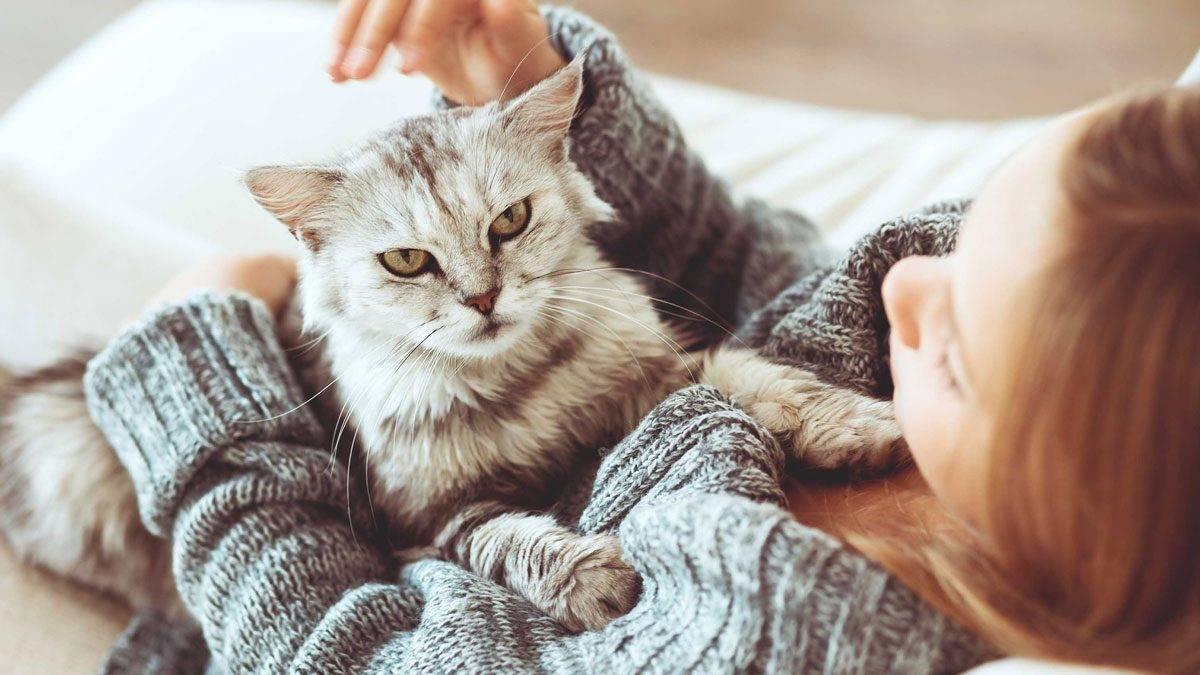صورة اضرار شعر القطط , التخلص من القطط