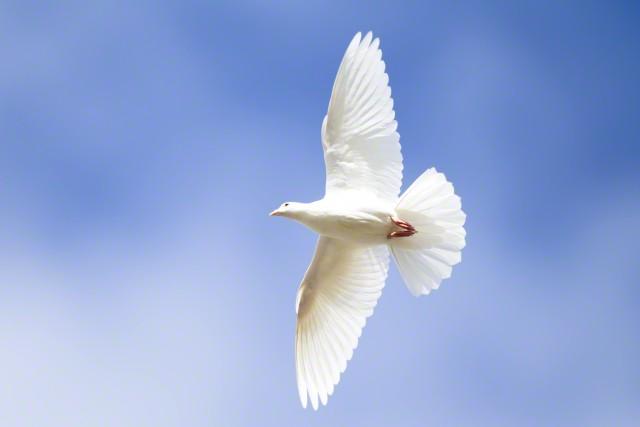صورة عبارات عن السلام الداخلي , حكمة عن السلام الداخلي