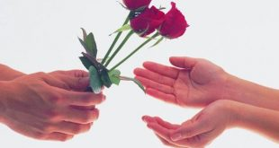 صورة اجمل ورود الحب في العالم , صور ورد رومانسي