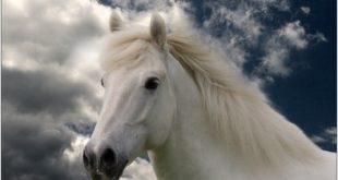 صورة صور خيول , الخيل اجمل صديق وفي