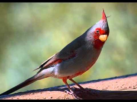 صورة طيور جميلة بالوان غريبة , صور طيور روعة 3781 1