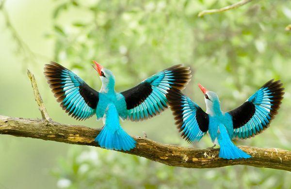 صورة طيور جميلة بالوان غريبة , صور طيور روعة 3781 2