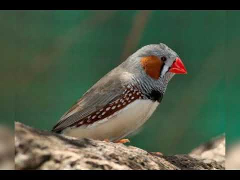 صورة طيور جميلة بالوان غريبة , صور طيور روعة 3781 3