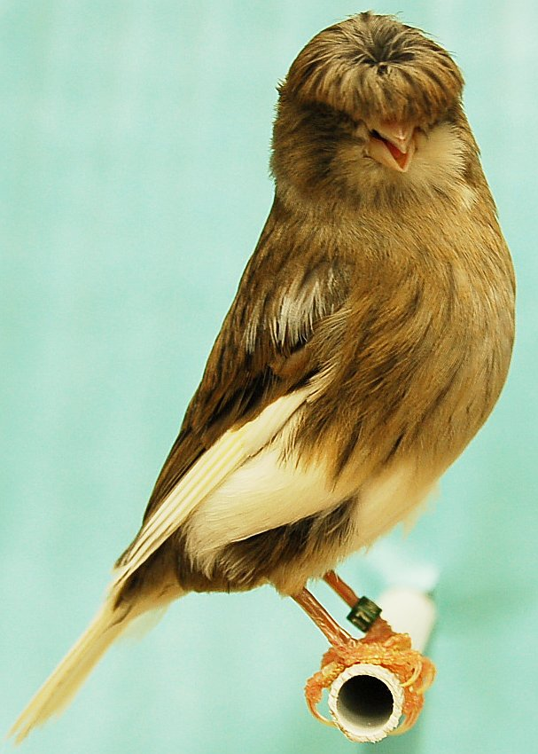 صورة طيور جميلة بالوان غريبة , صور طيور روعة 3781 5