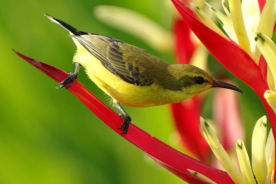 صورة طيور جميلة بالوان غريبة , صور طيور روعة