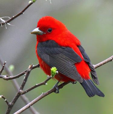 صورة طيور جميلة بالوان غريبة , صور طيور روعة 3781