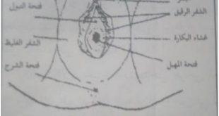 صورة حجم فتحة المهبل قبل الزواج , معلومه مهمه لا تعرفيها