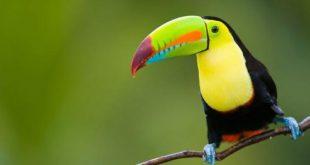 صورة اجمل صور طيور , اجمل الالوان المبهجة للطيور