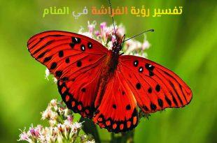 صورة تفسير رؤية الفراشة في المنام , تاويل ابن شاهين