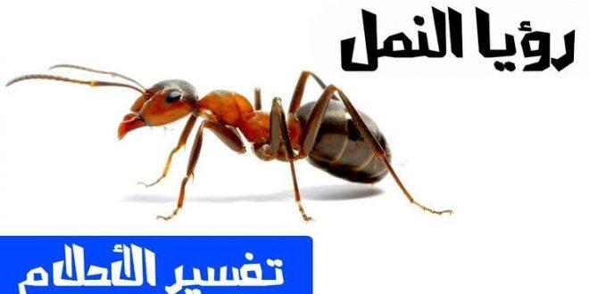 صورة تفسير اكل النمل في المنام , تخلصي من النمل الاسود