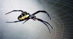صورة تفسير الاحلام العنكبوت الاسود , لن تصدق تفسير الحلم