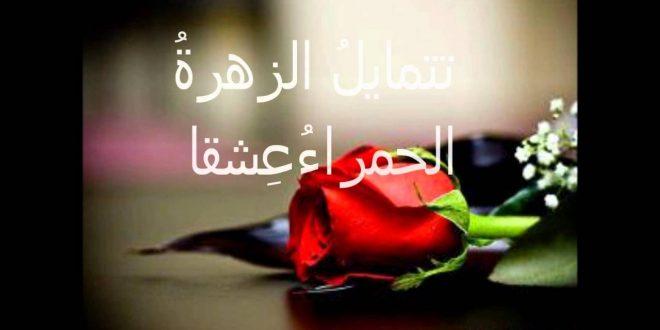 صورة كلام جميل عن الورد , اجمل ما قيل عن الورد