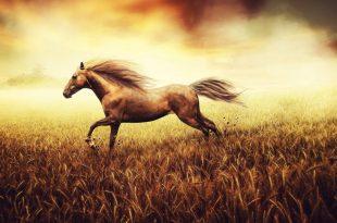 صورة تفسير حلم الحصان البني للحامل ، مش هتصدق التفسير