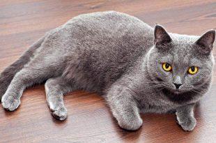 صورة انواع القطط بالصور ، كيفية التمييز بينهما