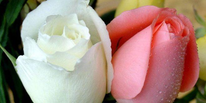 صورة صور زهور طبيعيه ، جمال الطبيعة لا مثيل له