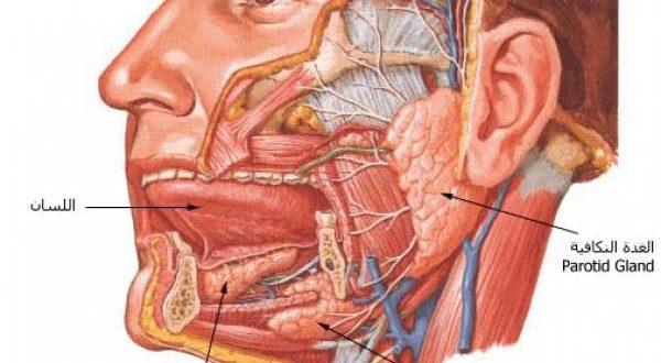 صورة هل يوجد عضلة اقوي في الجسم راح اقلك , ما هي اقوى عضلة في جسم الانسان