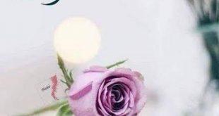 صورة اجمل كلام لاجمل مساء , رسائل واتس اب مساء الخير