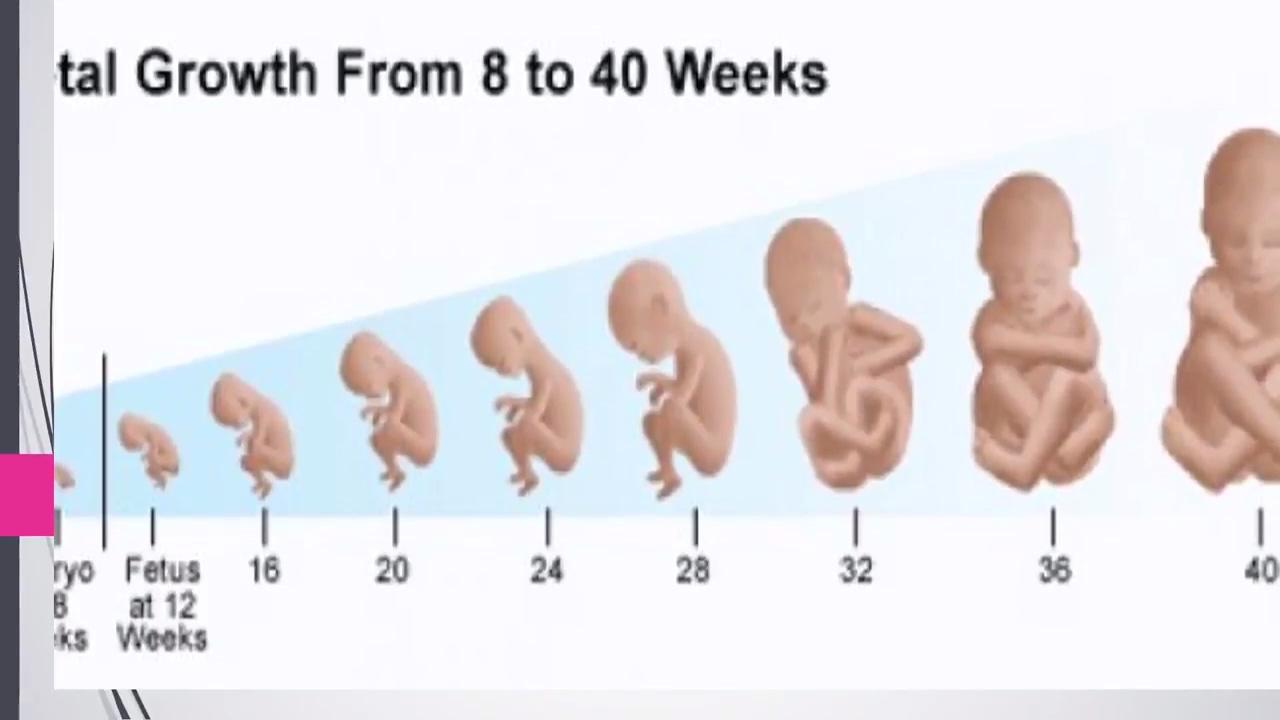 صورة تهم كل الحوامل  , مراحل الحمل بالاشهر 6517 1