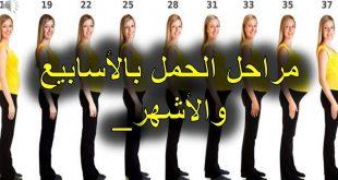 صورة تهم كل الحوامل , مراحل الحمل بالاشهر