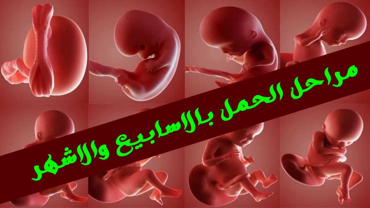 صورة تهم كل الحوامل  , مراحل الحمل بالاشهر 6517 4