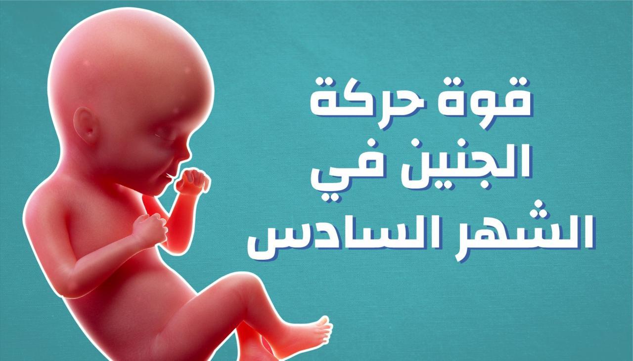 صورة تهم كل الحوامل  , مراحل الحمل بالاشهر 6517 7