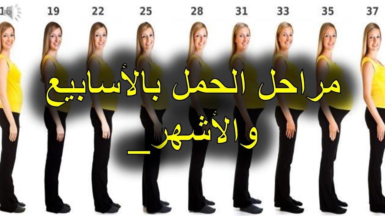 صورة تهم كل الحوامل  , مراحل الحمل بالاشهر 6517