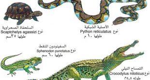 صورة الزواحف أشكالها كثير هقولك عليها، بحث عن الزواحف مع الصور